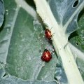 lady-bug-feast
